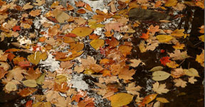 Mill Creek Leaves, 2004